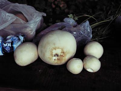 Męska wyprawa, grzyby we wrześniu,  purchawica olbrzymia, czasznica olbrzymia, Langermannia gigantea