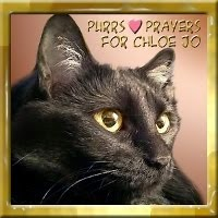 PURRS FOR CHLOE JO