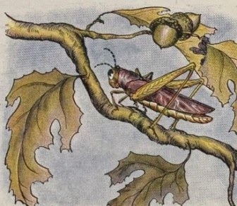 "Cerita Anak: ""Burung Hantu Tua dan Belalang"""