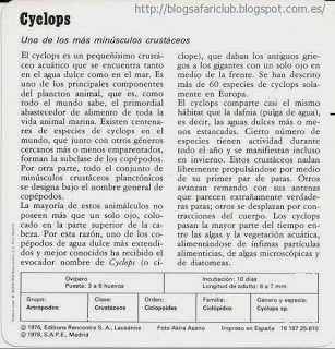 Blog Safari Club, características del Cyclops