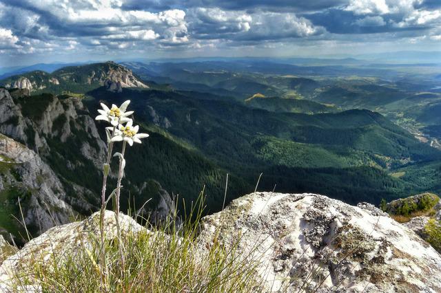 Floare de colt...