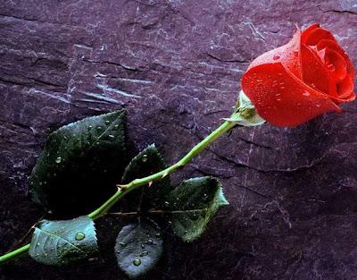 Belle lettres d'amour 1