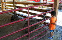 Petting Zoo in Pigeon Forge, TN