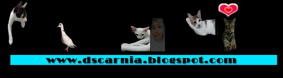 Dscarnia