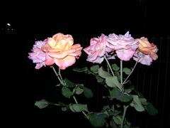 É com rosas que te recebo quando aqui estiver.