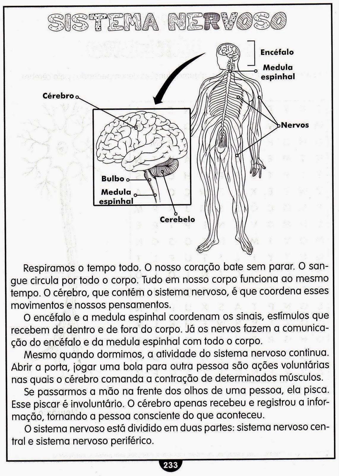 Atividades de ciências 5 ano sistema nervoso