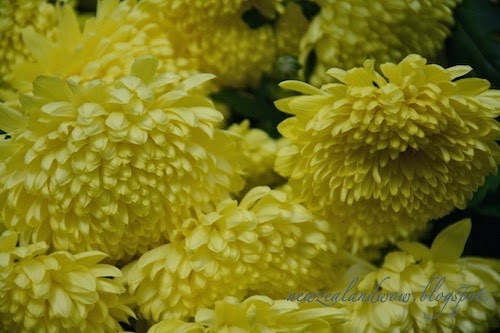 Attractive Yellow Flowers