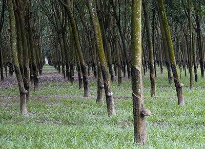 Tanah2getah Faktor Faktor Perkembangan Perusahaan Tanaman Getah Di Tanah