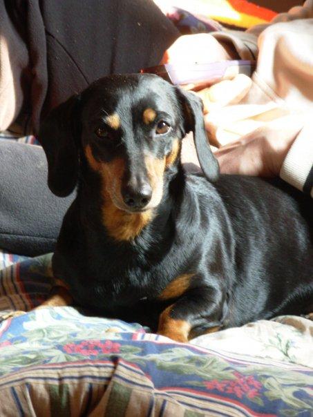 Frida russell gennaio 2012 - Pipi sul divano ...