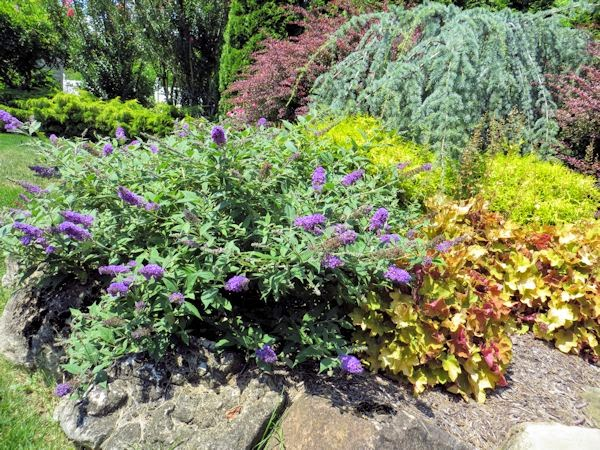 A GUIDE TO NORTHEASTERN GARDENING