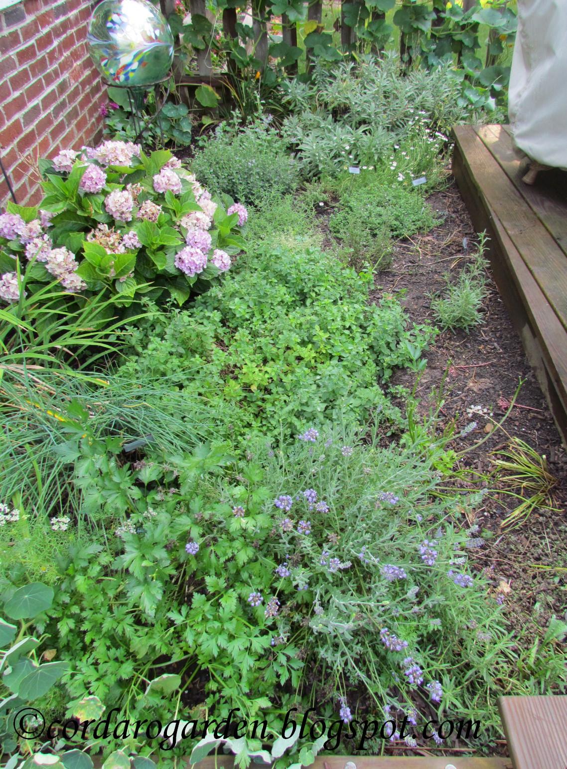 The Gardener Of Eden Hot Home Garden Happenings