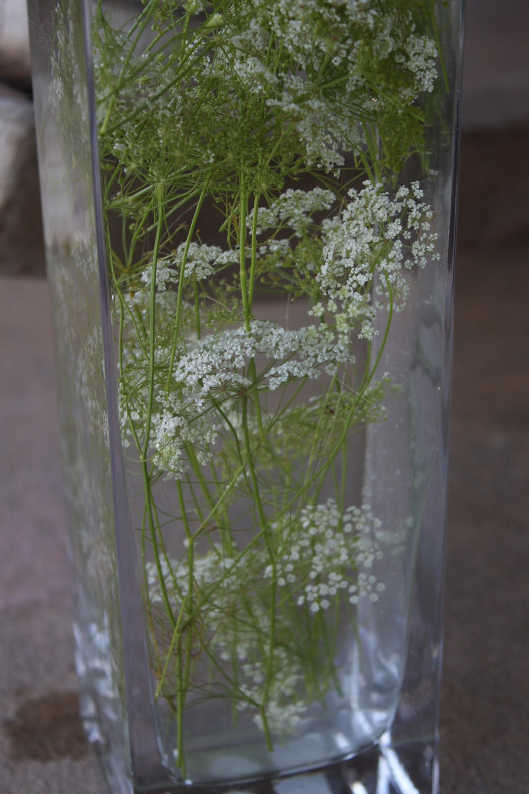 Update Submerged Queen Anne S Lace Centerpiece Getting Some Fun