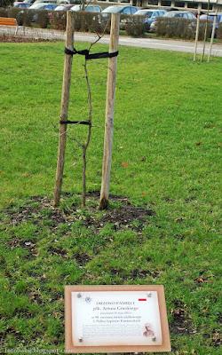http://fotobabij.blogspot.com/2015/12/drzewo-pamieci-pk-artura-gorskiego-puawy.html