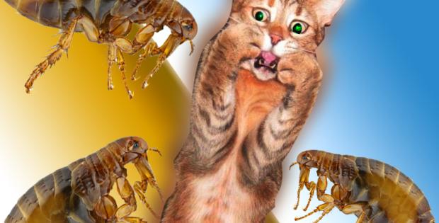 veterinaria online remedios caseros para eliminar pulgas en gatos
