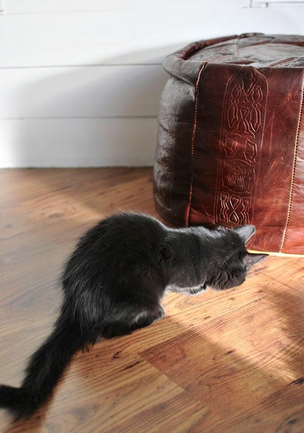 svart kattunge skinnpuff