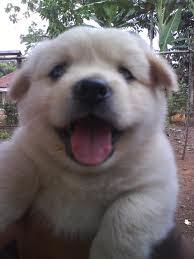 gambar anak anjing lucu 1 untuk anak anjing baru lahir