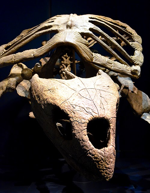 Protostega, Tellus Science Museum