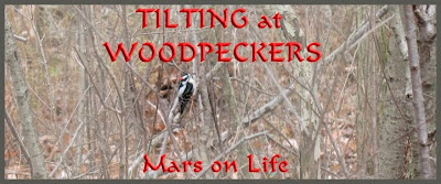 TILTING at WOODPECKERS