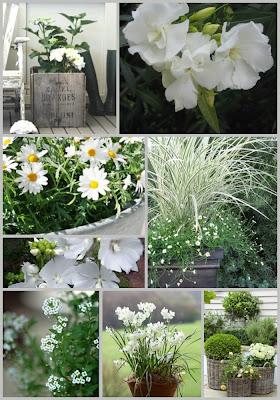 Anma zine een blog over alles wat groeit en bloeit zeg het met kleur for Schaduw een terras