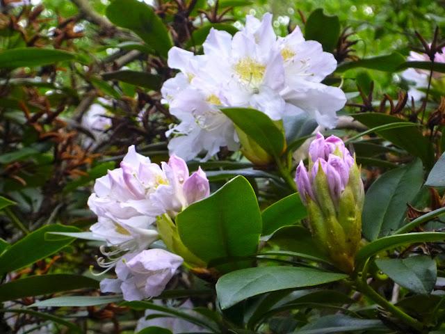 Frühlingsbild mit Blättern und weiß-rosa-gelben Blüten