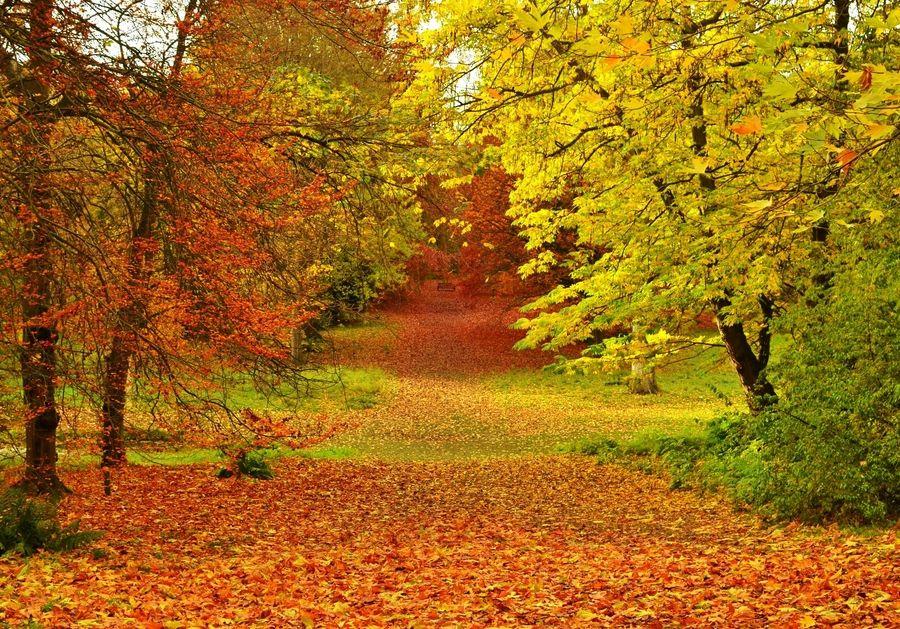 9. Natures carpet..... by Sarah johnson