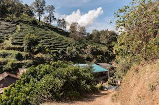 Teegärten von Kleinbauern