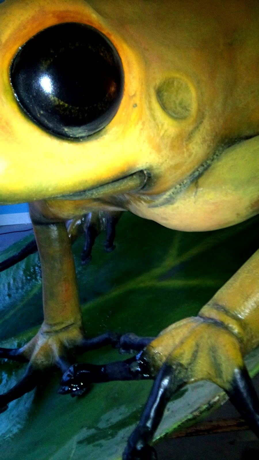 serpientes venenosas: Nueva exposición de animales venenosos en Madrid.