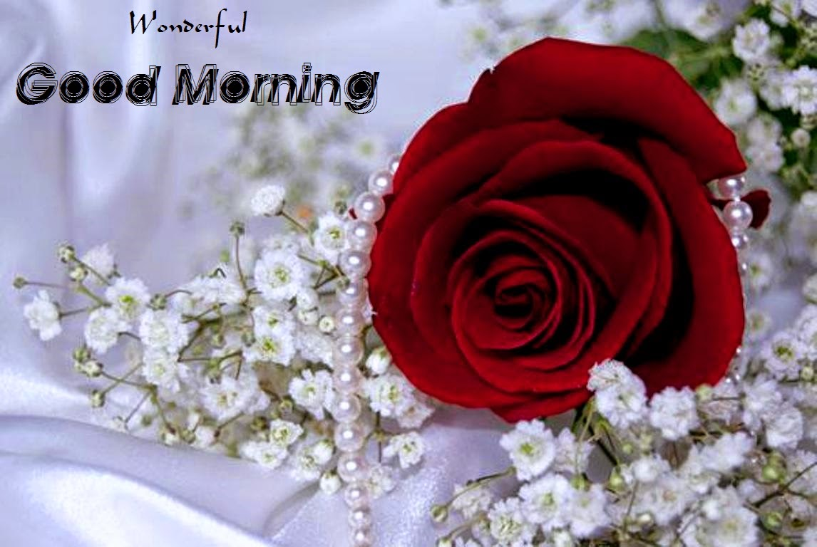 Good Morning Beautiful Red Rose Image : Good morning red rose wallpapers for girlfriends