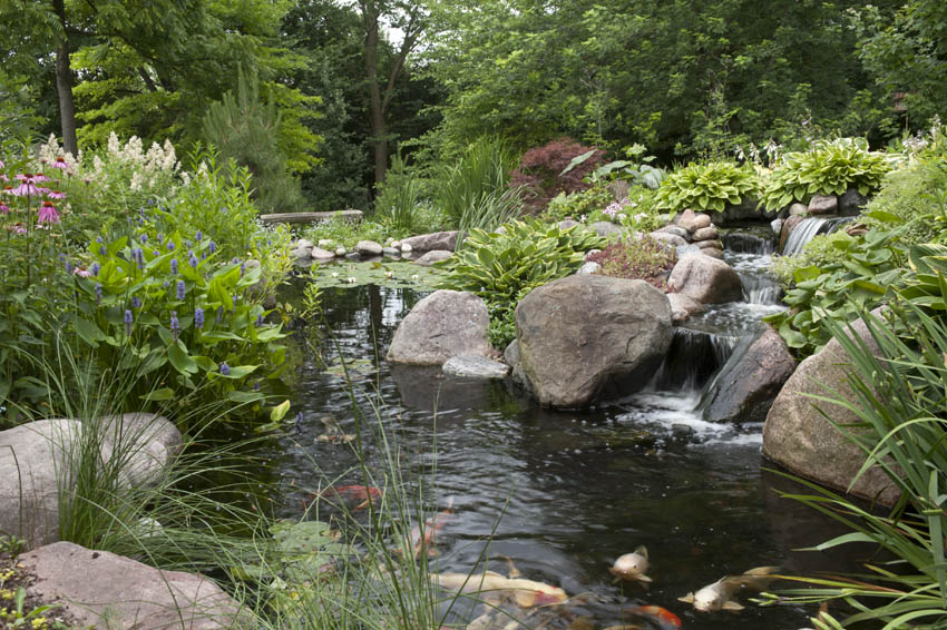 Dreaming of water in the garden on pinterest water for Fish pond landscaping