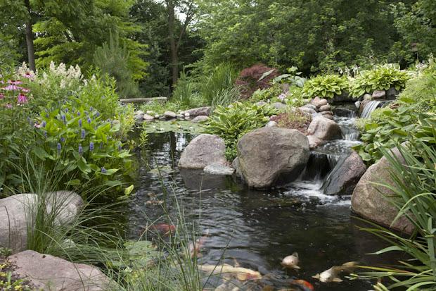 aquascape landscape designing