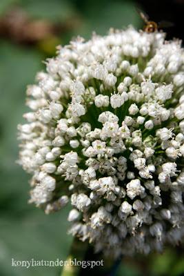 august-in-the-garden-onion-flower