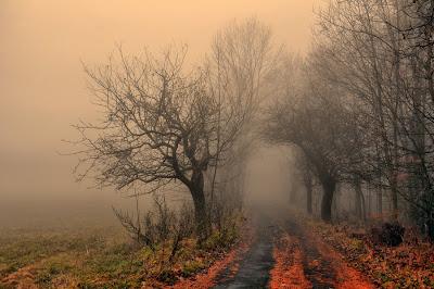 Preciosas fotografías de Tomsu Martin