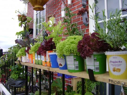 My climate change garden