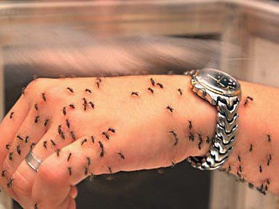 признаки паразитов в организме