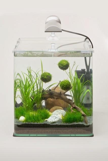 Un poco de carlos ziok nanos pico micro o simplemente for Todo para acuarios