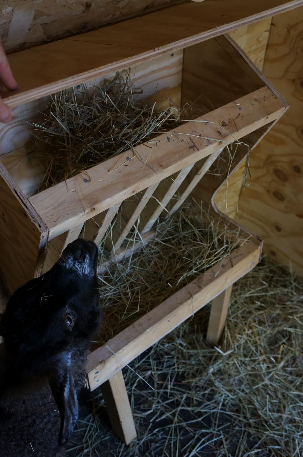 the backyard farming connection a better goat feeder
