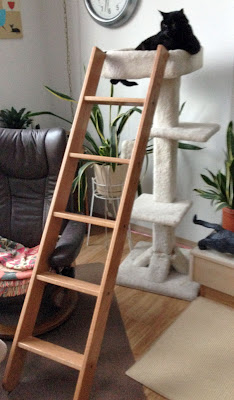 Dorm ladder for cats