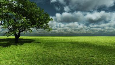 Fotografías de árboles en  todas las estaciones del año III