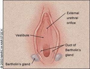 Bartholinitis Bartholinitis: symptoms,