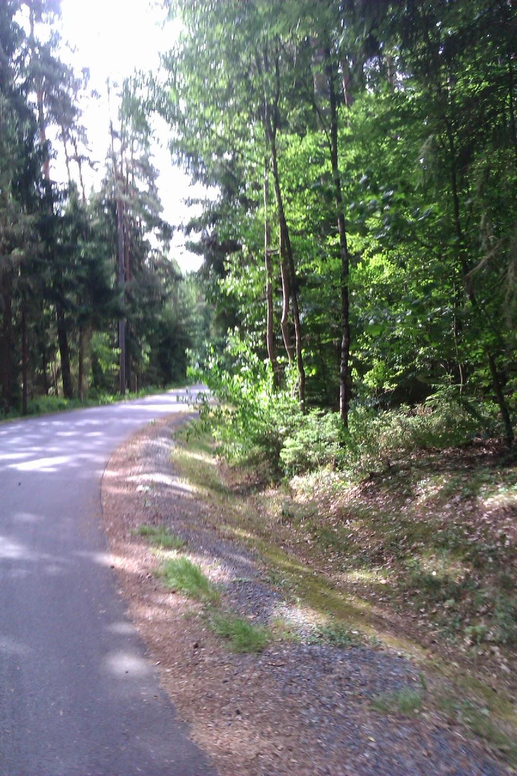 Radweg nach weiden durch den Wald