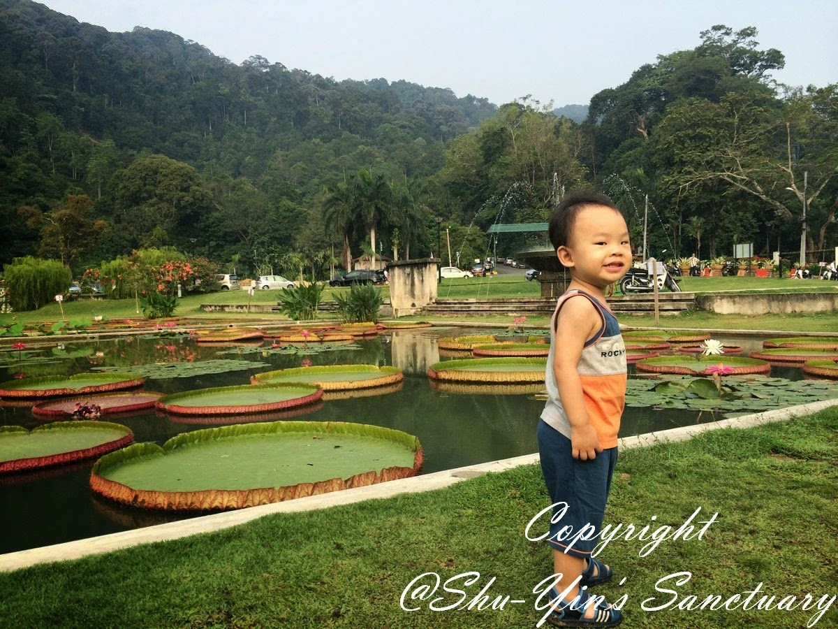 shu-yin's sanctuary: a short morning stroll @ penang botanical gardens
