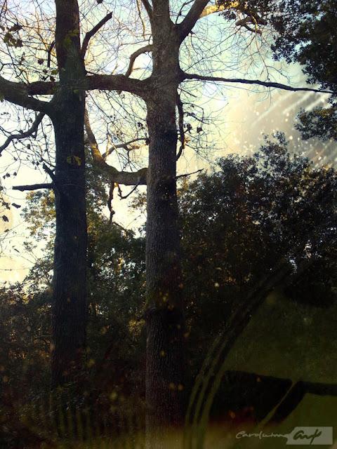 bosque la mola roble