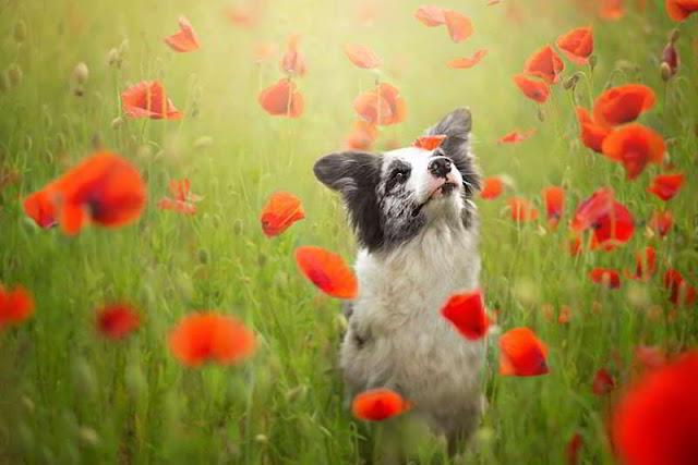 dog-photography-alicja-zmyslowska-04