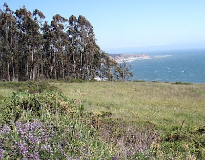 view of Bolinas Point