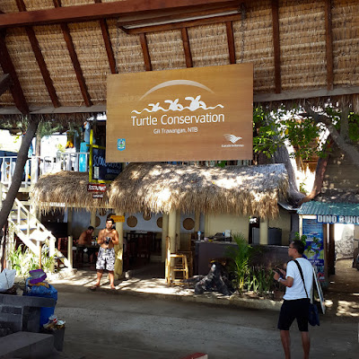 Turtles conservation Gili Trawangan