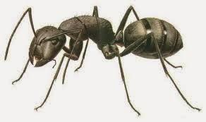 Uniknya Tentang Kehidupan Semut