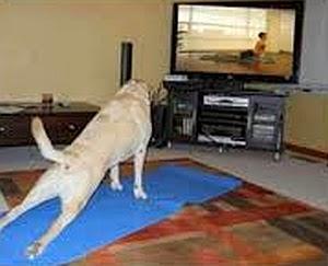 Imagenes Graciosas de Animales, Perro en Forma