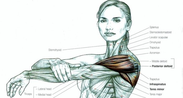 Read This Before Ever Stretching Again (and that includes for your back and sciatica pain)