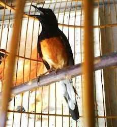 Info lengkap burung