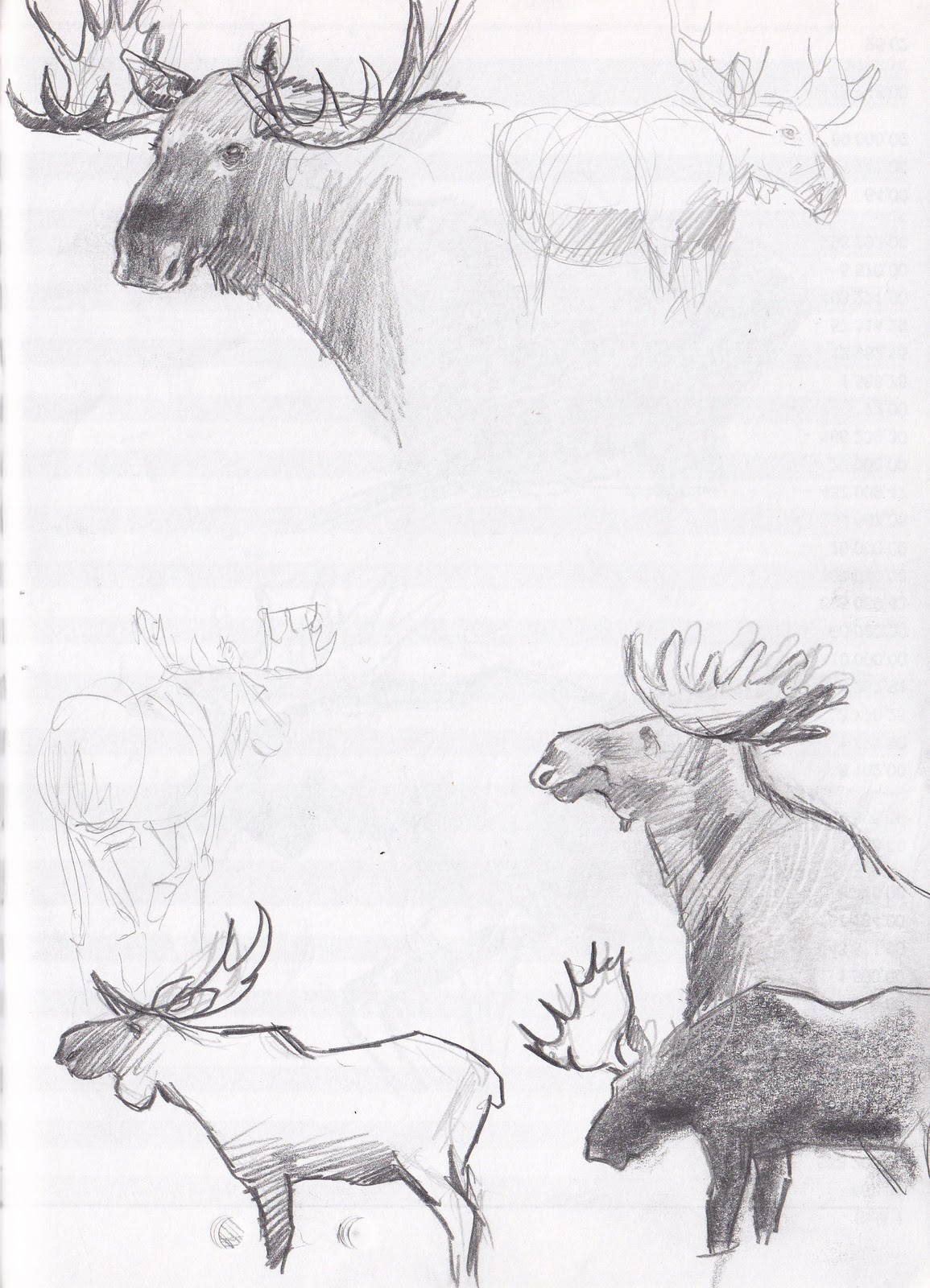 How to draw moose antlers for How to draw a moos